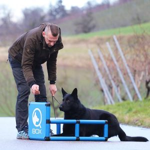 sporthund_qboxplatz