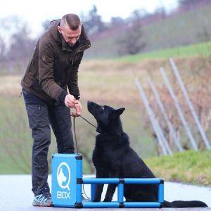 sporthund_qboxsitz