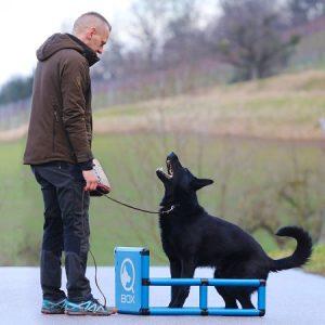 sporthund_qboxverbellen