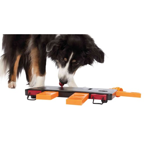 move_2_win_denkspel_dogactivity_hond